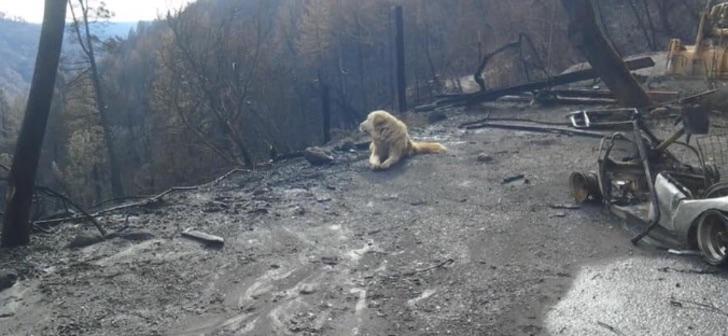 Perro sobrevivió a los incendios de California