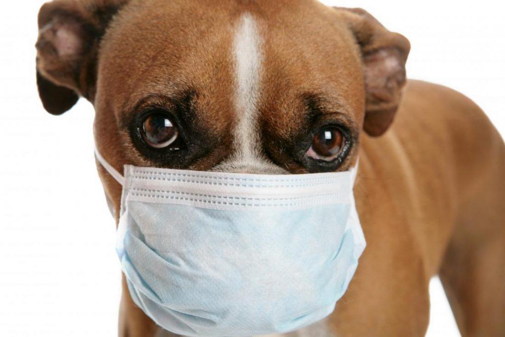 Riesgo en mascotas de contraer el coronavirus